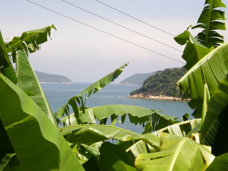 Islands, Oceans & Banana Trees